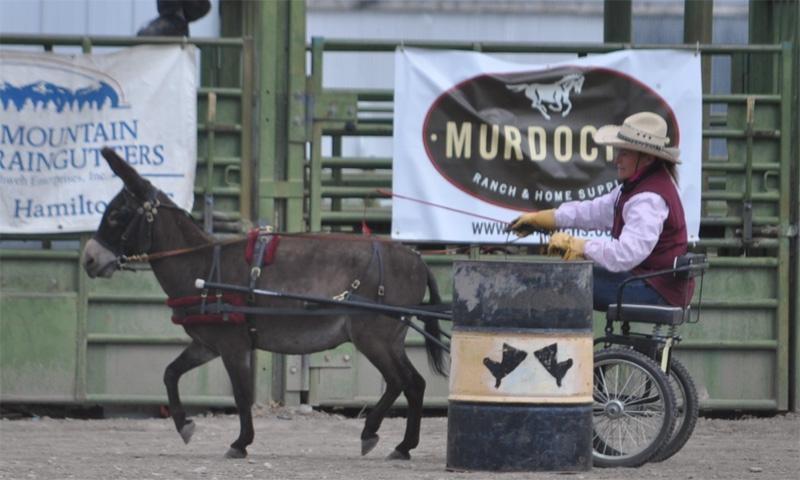 Montana Mule Days