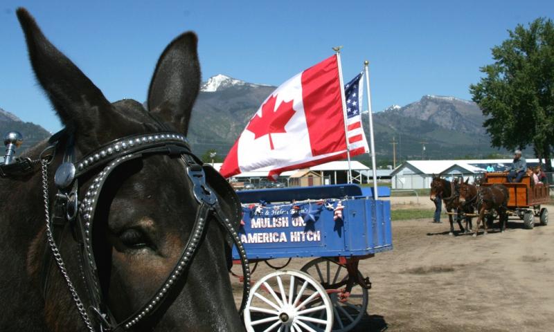 Montana Mule Days Hamilton Montana