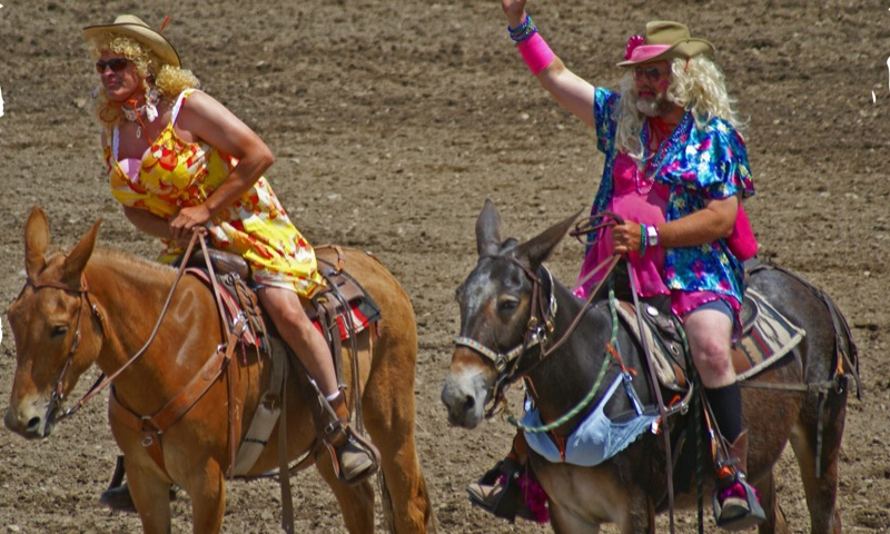 Montana Mule Days Montana