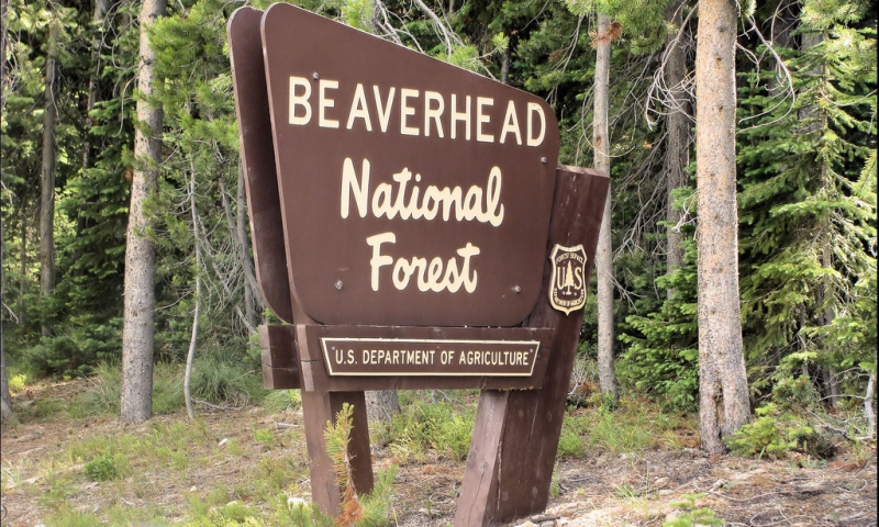Beaverhead National Forest