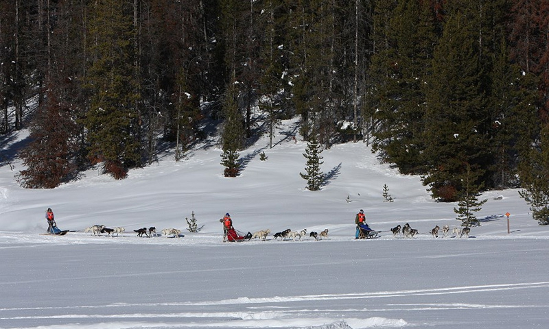 Bitterroot Valley Dog Sled