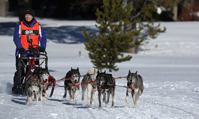 Bitterroot Valley Montana Dog Sled