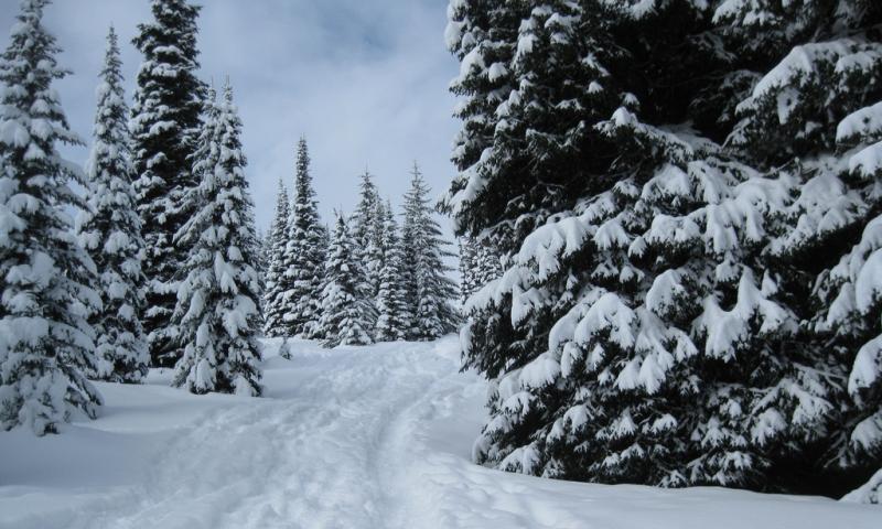 Bitterroot Valley Montana Snowshoeing