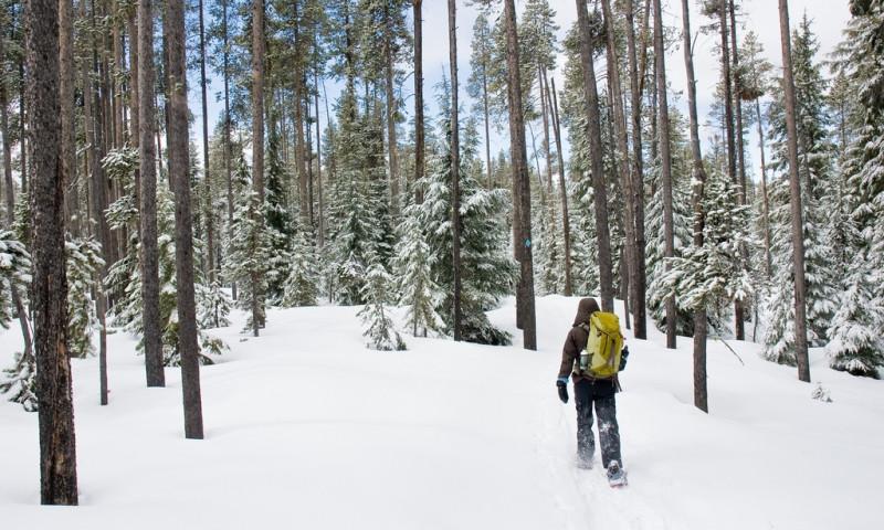 Bend Snowshoe Trails